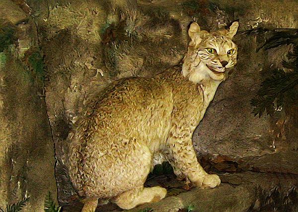 Bill Cannon - Lynx