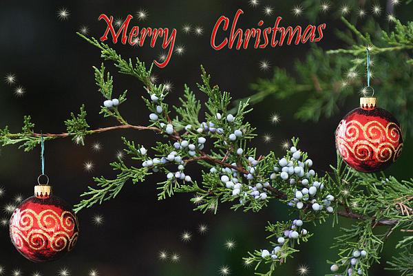 Rick Friedle - Merry Christmas