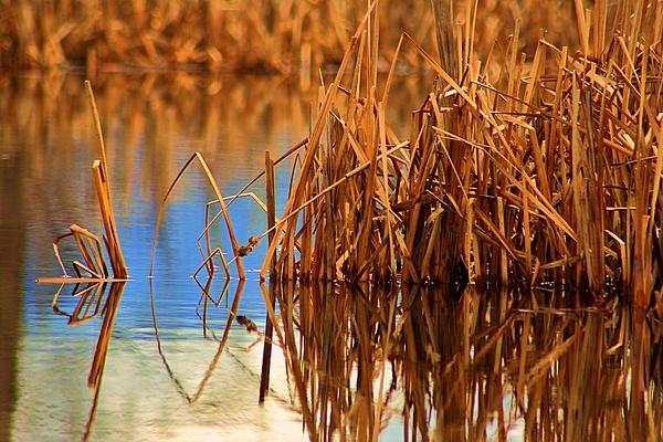 William Kelvie - Montana Peace Pond