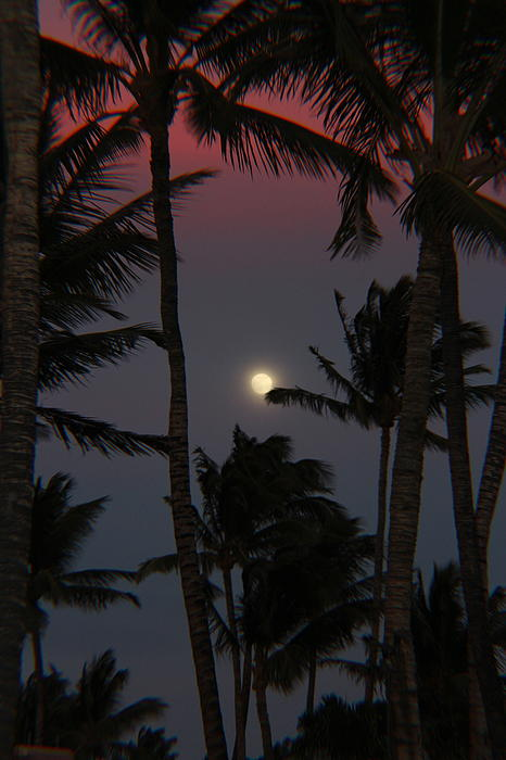 Raquel Amaral - Moon over Hawaii