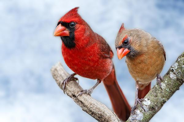 Bonnie Barry - Mr. and Mrs. Cardinal