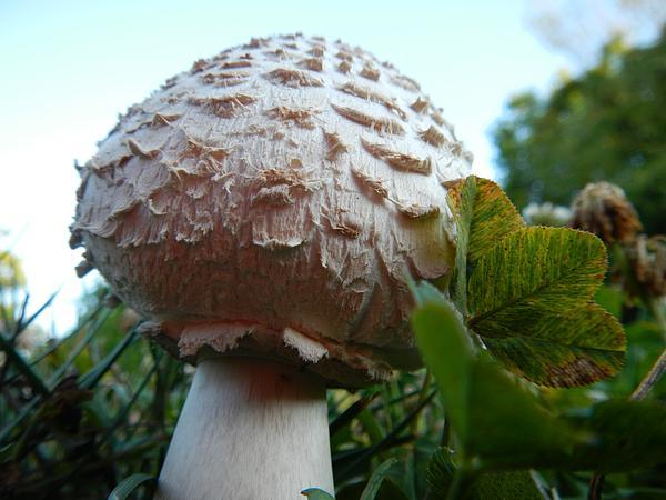 Danny Smith - Mushroom Clouds