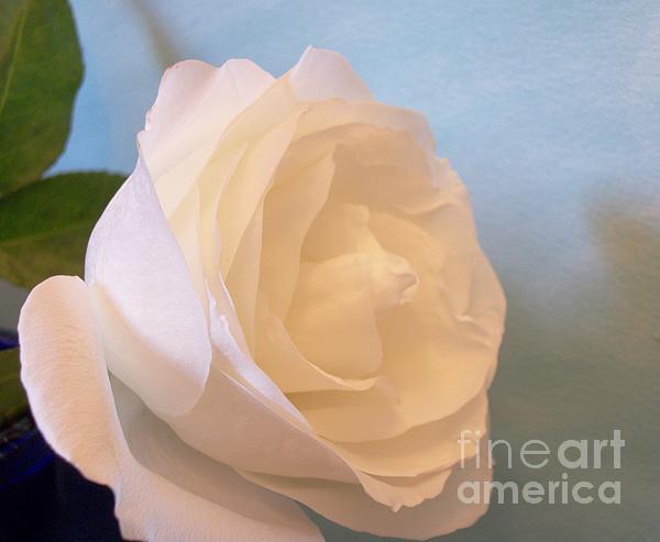 Marsha Heiken - My Mommy My Rose