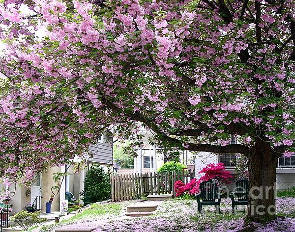 Byron Varvarigos - Neighborhood Cherry Tree