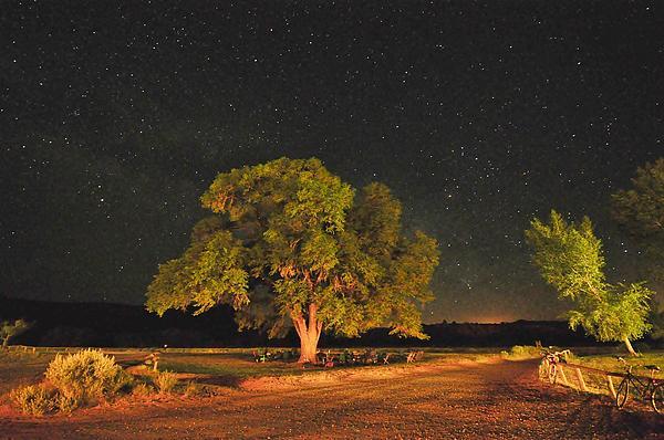 Mark Fesgen - New Mexico Stars