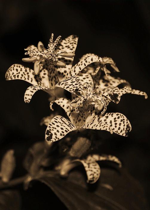 Jen Isringhausen - Night Flower