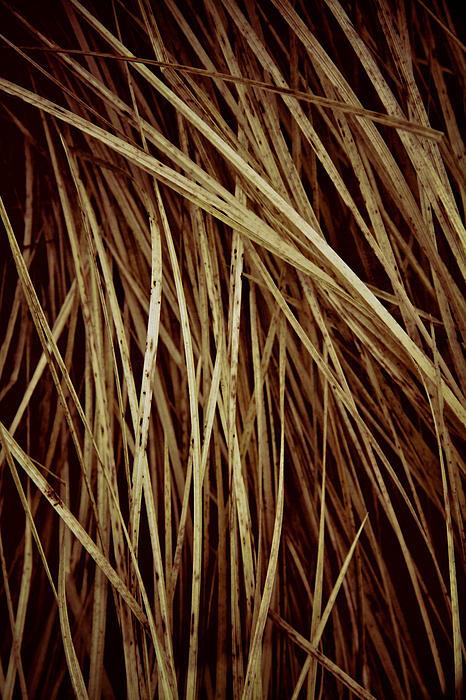 Odd Jeppesen - Of Needles And Haystacks