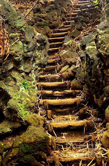 Dean Harte - Old Forest Steps