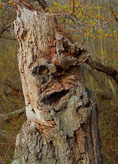 William Kaluta  - Old Man In The Tree   William Kaluta Photography