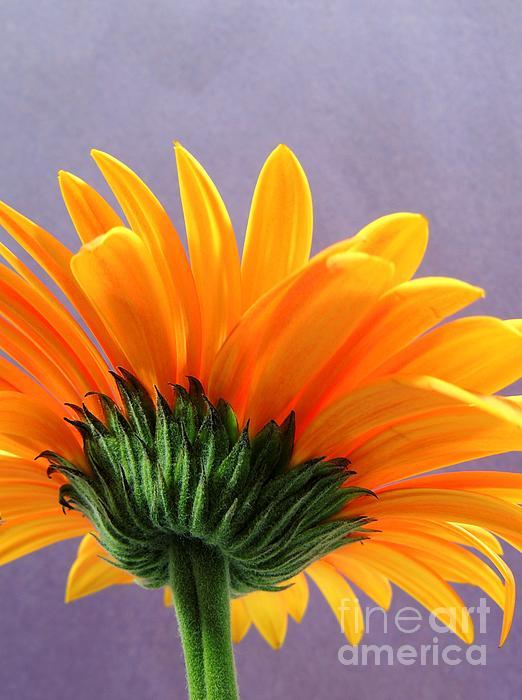 Gary Harris - Orange Backsider 2