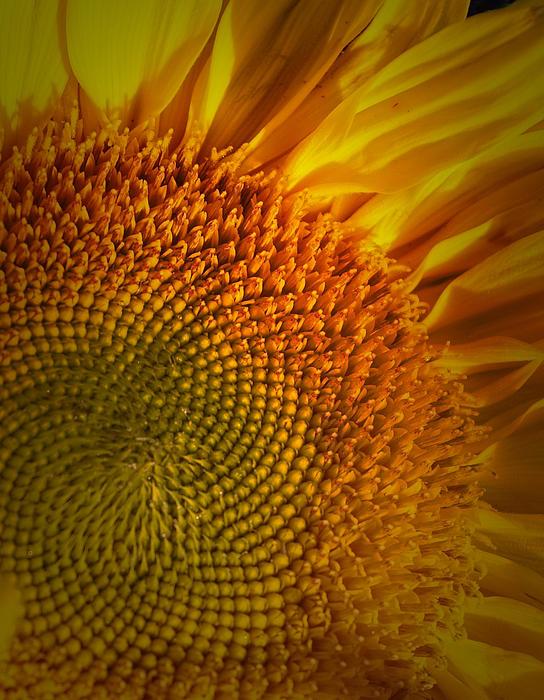 James Zuffoletto - Orange Flower