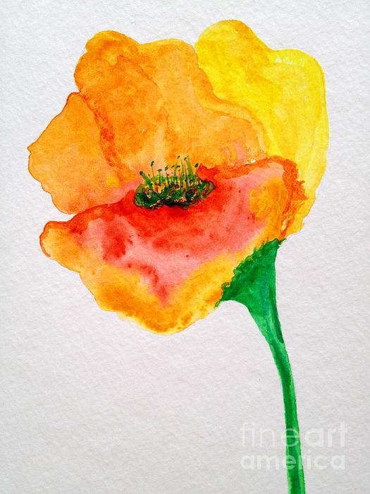 Nancy Chapman - Orange Poppy