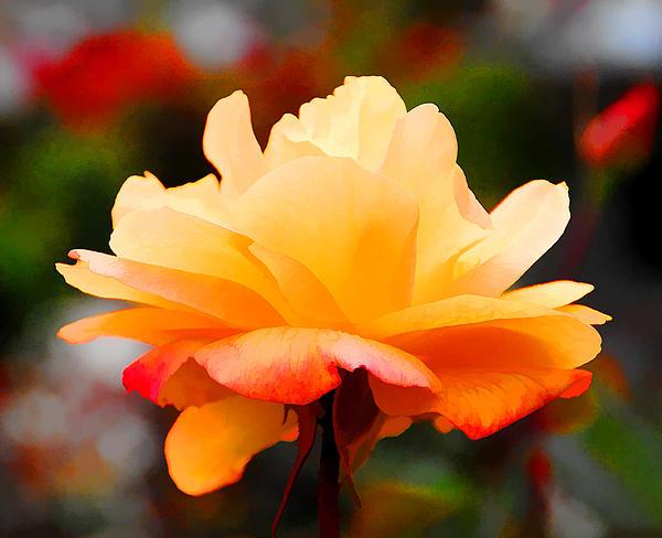 Diane Wood - Orange Sherbet