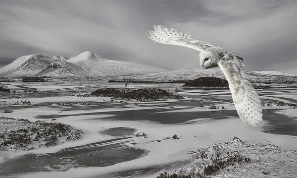 Sam Smith Photography - Owl in flight