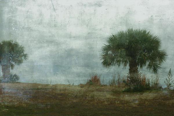 Cindi Ressler - Palm Trees