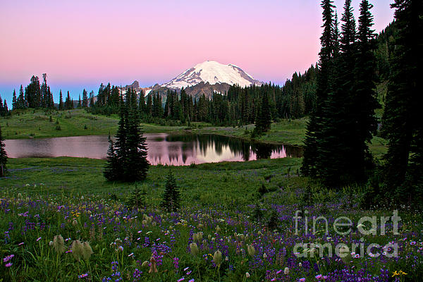 Marcus Angeline - Pastel Skies Over Rainier