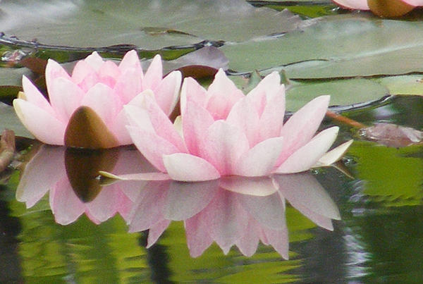 Carol Bruno - Pink Reflections