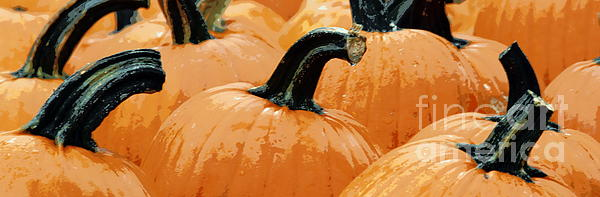 Joe Jake Pratt - Pumpkin Gossip