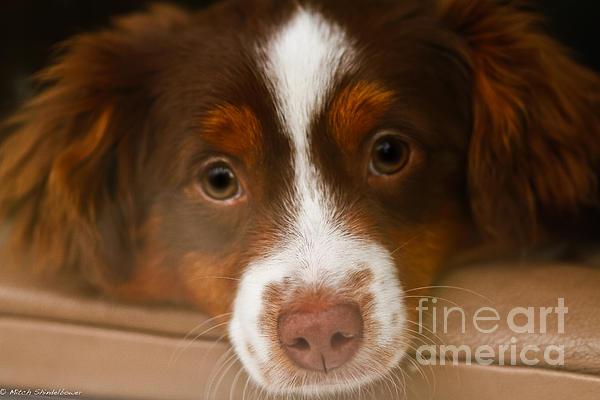 Mitch Shindelbower - Puppy Dog Eyes
