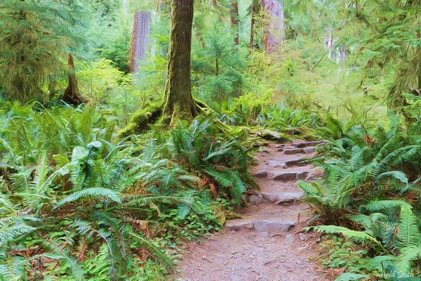 Heidi Smith - Rain Forest Walk