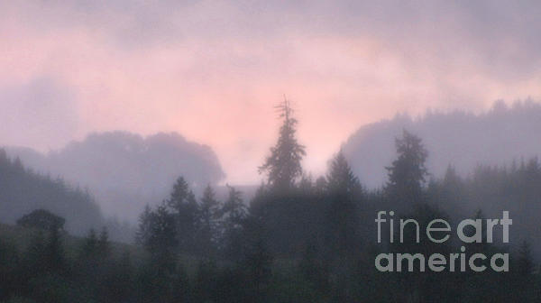 Katie Wing Vigil - Rain With Pink Sky And Pine Tree