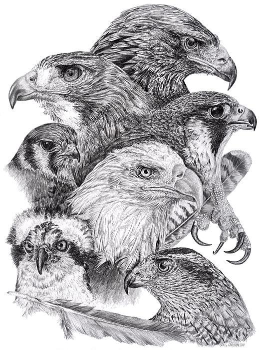 Craig Carlson - Raptor Montage