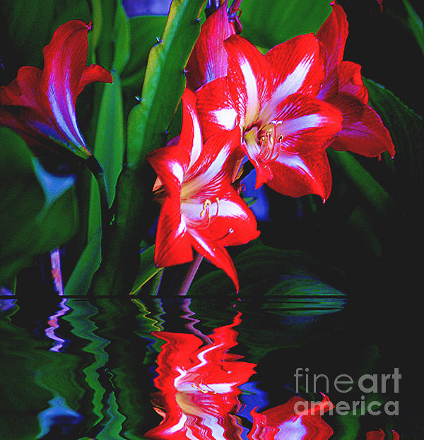 John  Kolenberg - Red Lillies Over The Water
