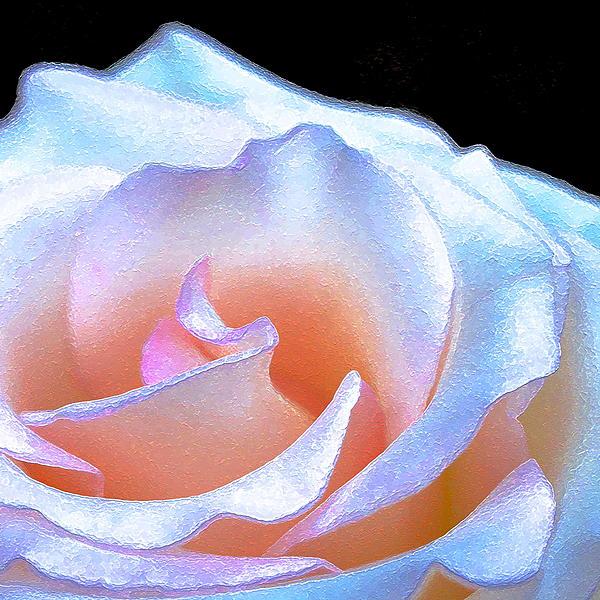 Pamela Cooper - Rose 158