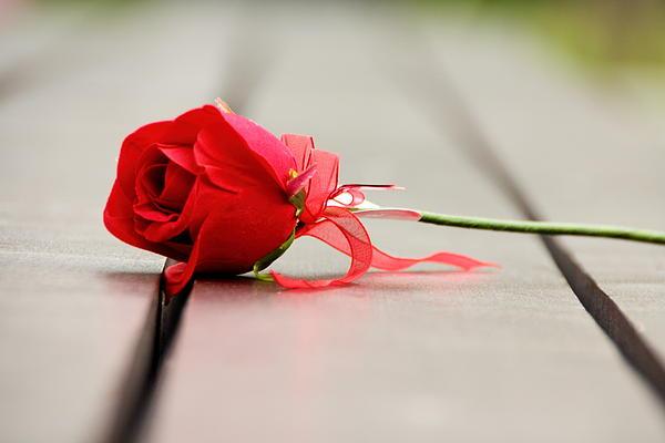 Nabil Kannan - Rose Gift