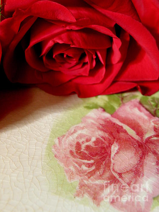 Lainie Wrightson - Rose to Rose