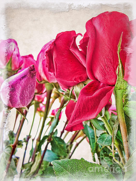 Joan  Minchak - Roses in White