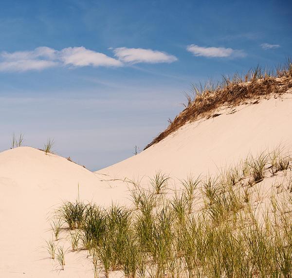 Frank Winters - Sandy Neck Dune