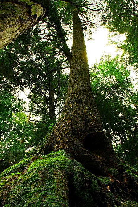 Kamil Swiatek - Screaming Tree
