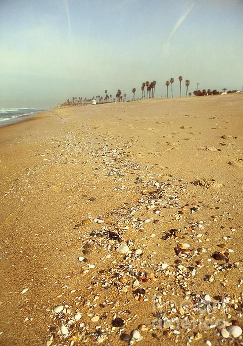 Susan Gary - Seashells Washed Ashore