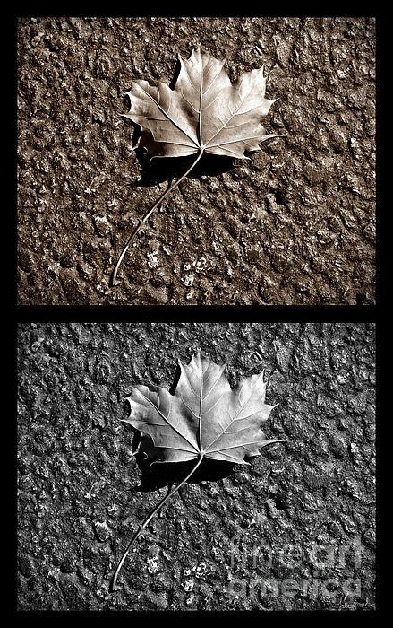 Luke Moore - Seasons of Change