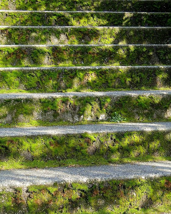 Ginger Denning - Shadow Moss Stairs