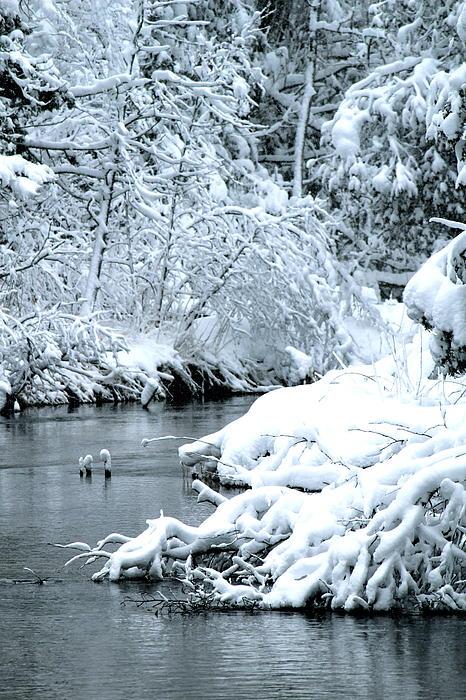 Kim Croff - Snowy River