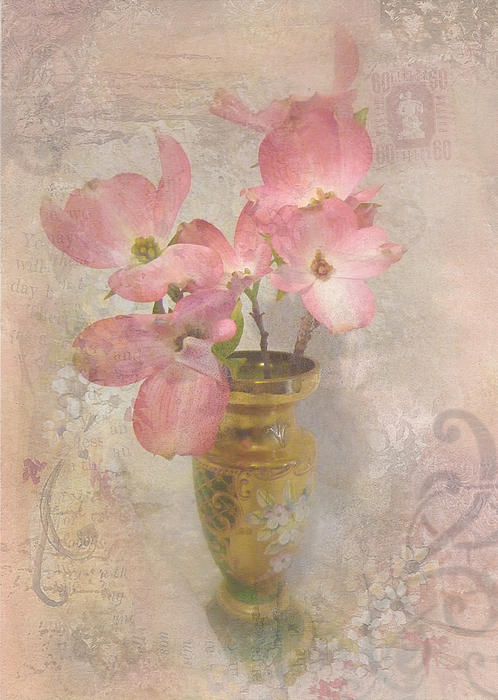 Cindy Wright - Softly Blooming