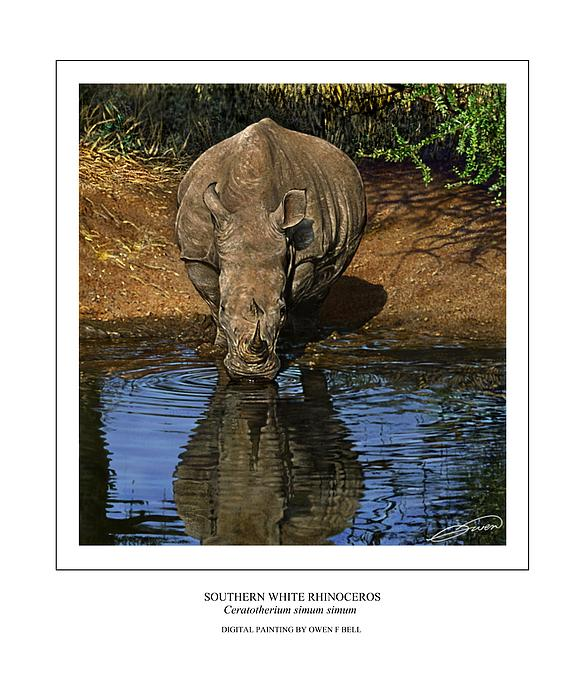 Southern White Rhinoceros At Waterhole Greeting Card For