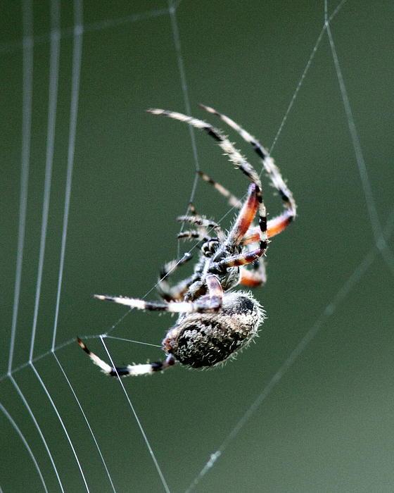 Travis Truelove - Spider - The Spinner