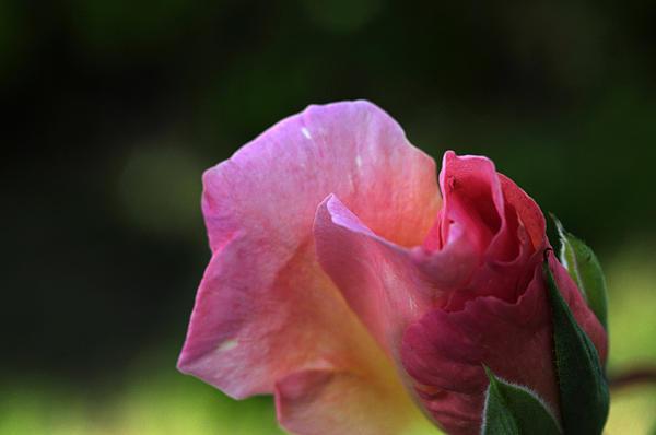 Wanda Brandon - Spreading Petals