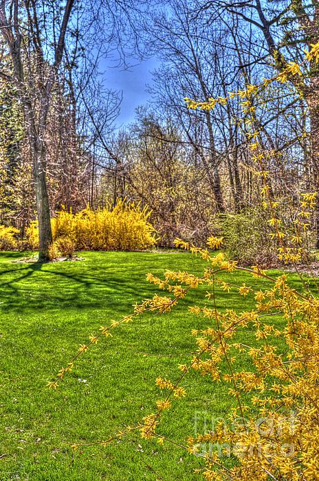 Anca Jugarean - Spring of Joy