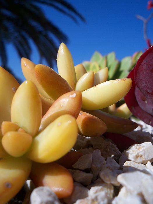 Katy Adebayo - Succulents in Baha