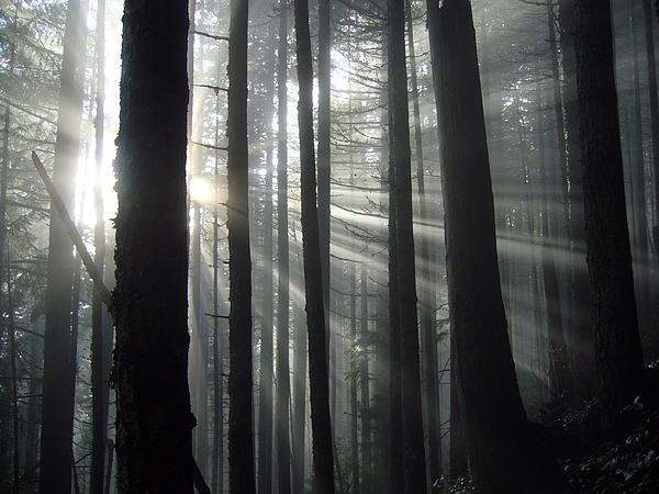 Mark Camp - Sunbeam