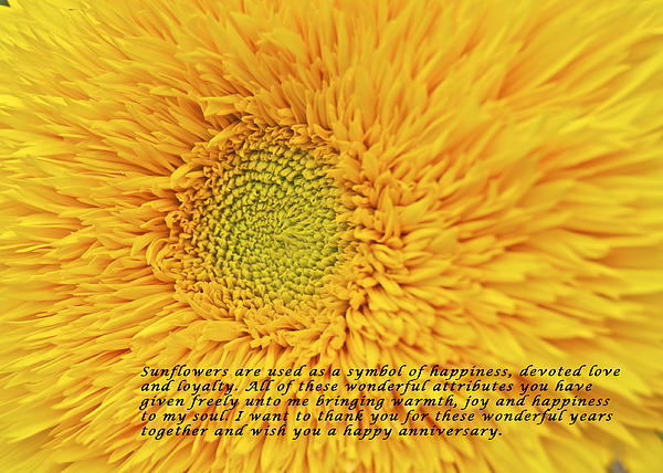 Michael Peychich - Sunflower Anniversary_2881