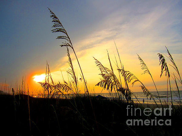 Julie Bostian - Sunrise Behind Sea Oats