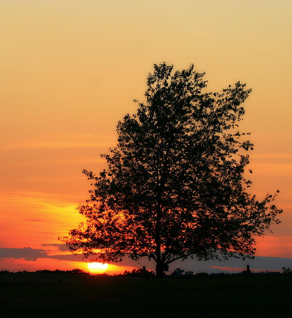Angela Rath - Square Photograph of a Fiery Orange Sunset and Tree Silhouette