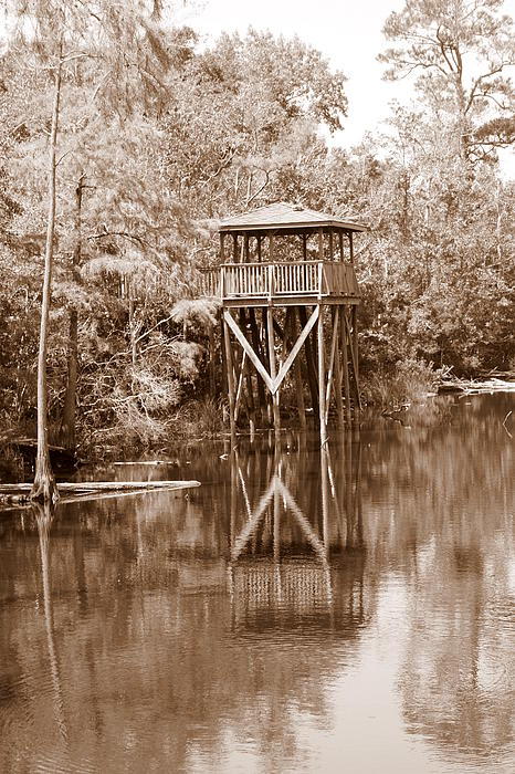 Cathy Jourdan - Swamp house