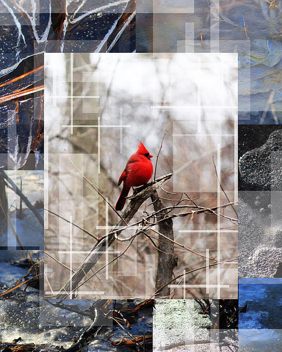 Andrew Sliwinski - The Cardinal And The Frozen Land