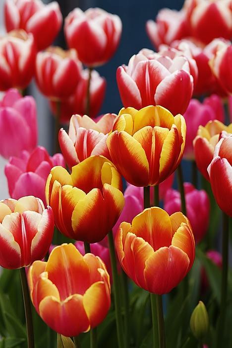 Debjyoti Ganguly - The Happy Flowers